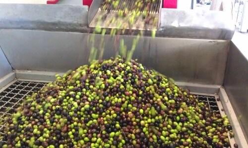 proceso-elaboracion-aceite-oliva